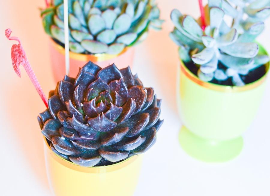goblet succulents