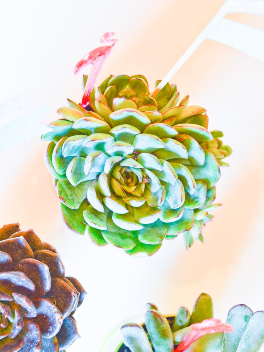 let's fête goblet succulents_4