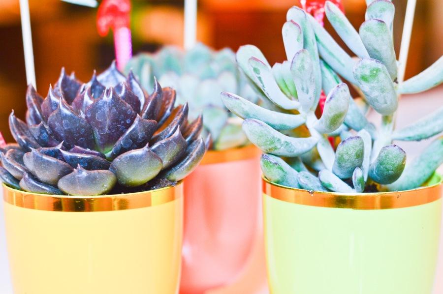 goblet succulents_7